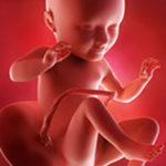 34. SSW (Schwangerschaftswoche)