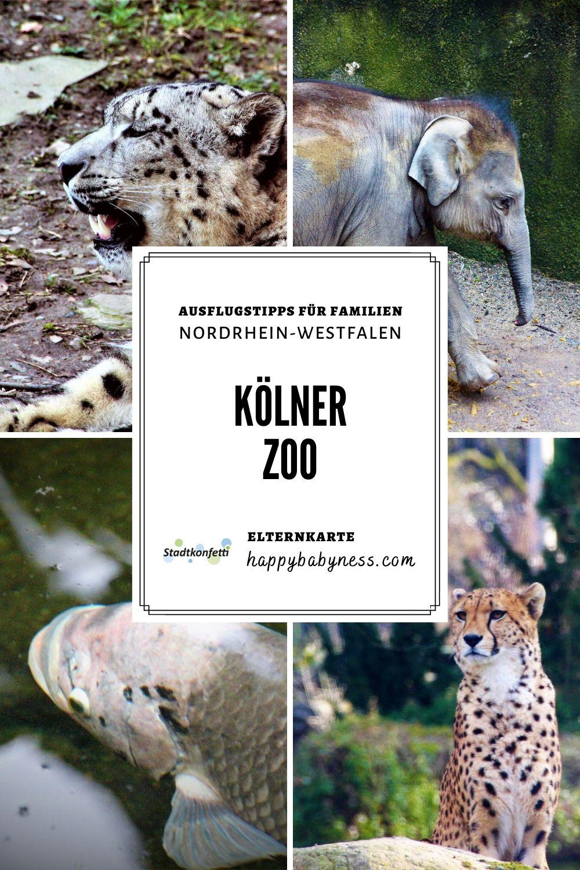 AUSFLUGSTIPPS_Familien_Unterwegs_Kind_NRW_Nordrhein-Westfalen_Koeln_Zoo_Tierpark